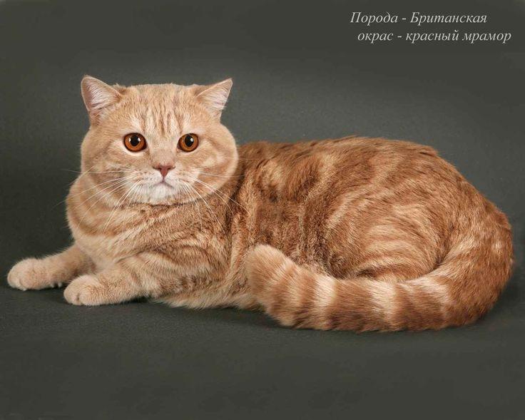 Насморк у кота, чем лечить в домашних условиях, симптомы, что делать, если чихает и чем вылечить насморк у кошки и котенка | Котизм