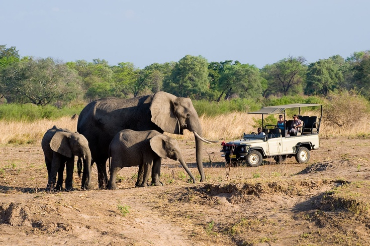 Game Drive at Hwange National Park in Zimbabwe