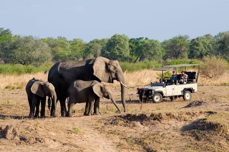 Game Drive at Hwange National Park in Zimbabwe