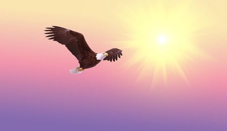 #bald #eagle #soaring #bird #raptor #flight #nature #bald #eagle #wildlife #animal #soar   http://ift.tt/2p0G1pN  #wild #freedom #predator #symbol #fly #flying #national #power #outdoor #majestic #usa #feather #beak #wings #powerful #strength