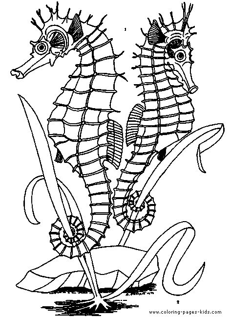 Inspirational Ocean Plants Coloring Pages 87 ocean animal coloring pages