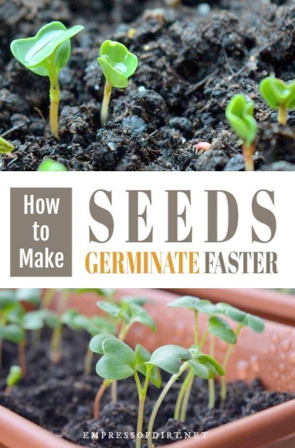 Gardening Tips For Beginners Uk Inside Gardening Tips For Balcony