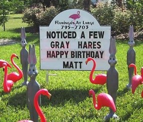 Don't Buy a card. Fill their yard! Birthday Yard Signs (941)795-7703 www.flamingosandmore.com Bradenton, FL https://www.facebook.com/FlamingosAtLarge  Flamingos, Cows, Pigs, Grey Hares, Storks, Hearts, Bears, Graduation, Welcome Home Soldier, Patriotic Themes. Servicing: Bradenton, Palmetto, Lakewood Ranch, Anna Maria, Holmes & Bradenton Beach, Longboat Key, Myakka, Parrish, Sarasota. Unique Gifts Lawn Surprise Anniversary Baby Shower Over the Hill Love Rental Flock 40th 50th 60th 70th 80th…