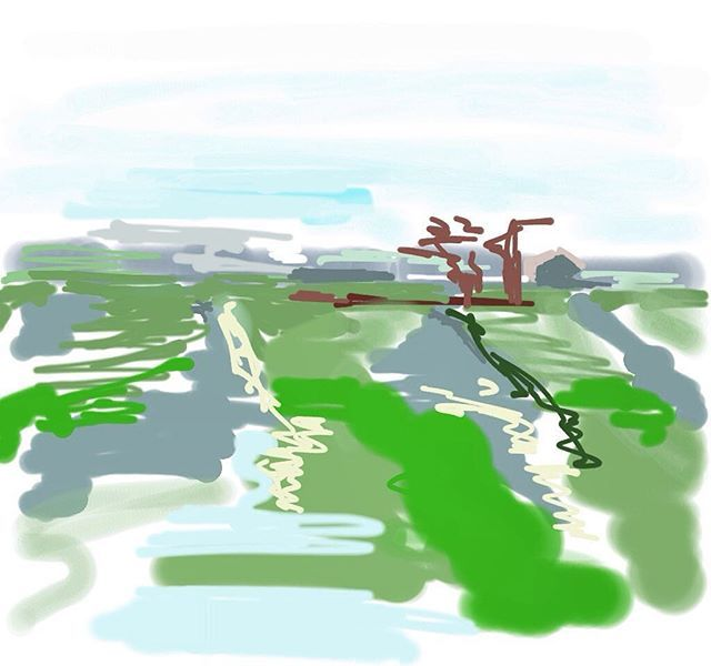 After last night's summer storm and rain #ipaddrawing #ipadillustration #drawdigital #dutchpolders #greenlandscape