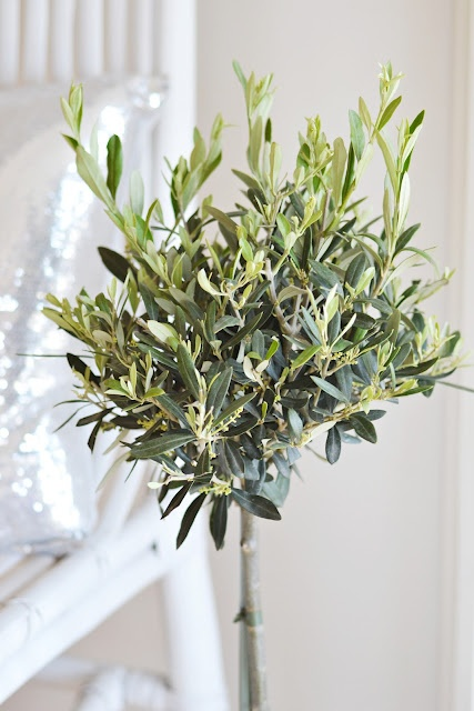 67 best Olive tree.... images on Pinterest | Olive tree, Olives and ...