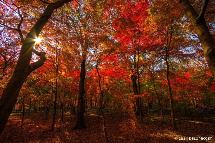 Series of photographs from the garden of Heirinji temple, in Saitama prefecture, Japan. Heirinji temple is the best place to go see autumn leaves. It is the delight of photographers Fall hunter.