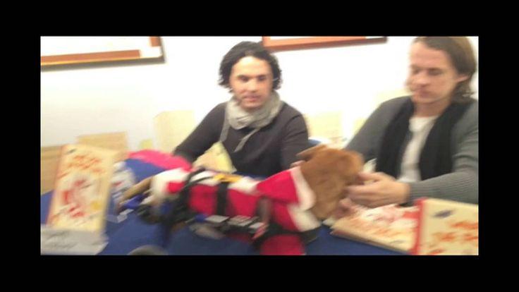 When Oscar met Ylvis! Wheelchair Dog meets Ylvis