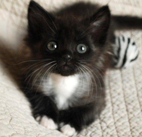 Black Kitty Love.