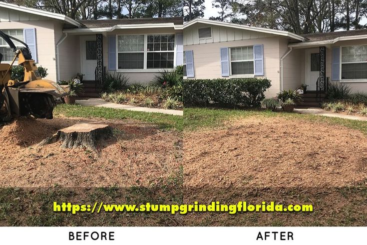 Stump Grinding in Jacksonville in 2020 Plains landscape