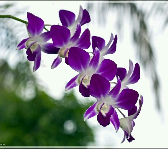orchid care indoor instructions