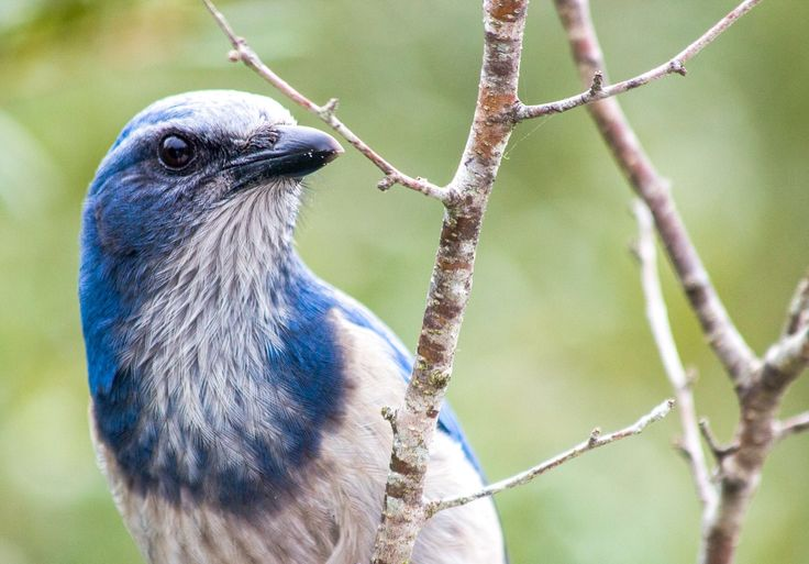 Grow These Native Plants So Your Backyard Birds Can Feast | Audubon http://www.audubon.org/news/grow-these-native-plants-so-your-backyard-birds-can-feast?utm_campaign=crowdfire&utm_content=crowdfire&utm_medium=social&utm_source=pinterest