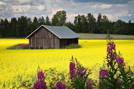 Countryside, Finland