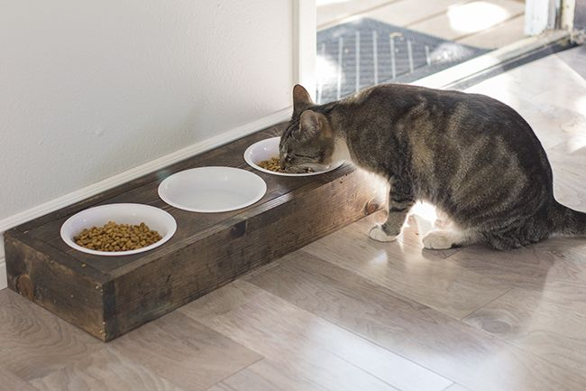 Rustic pet food dish. I wonder if we could make this...?