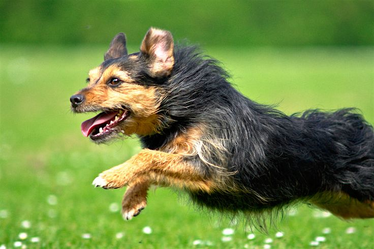 A Full List of Pet Holidays Throughout the Year http://www.petful.com/misc/full-list-pet-holidays-throughout-year/