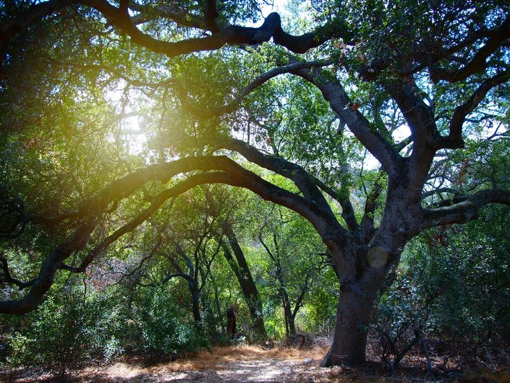 /// Day Hike Elfin Forest, San Diego