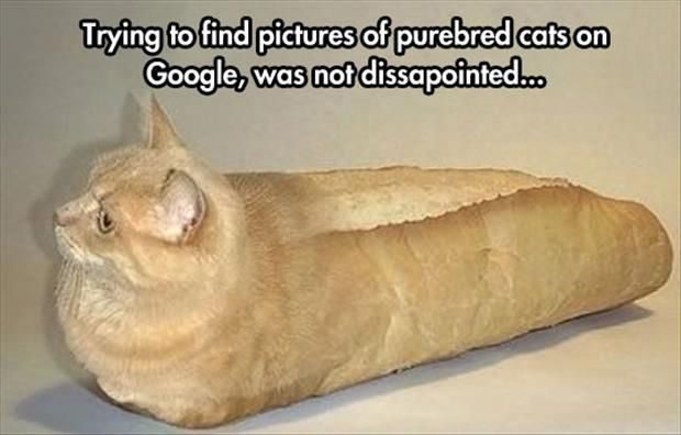 Funny Pictures Of The Day  81 Pics