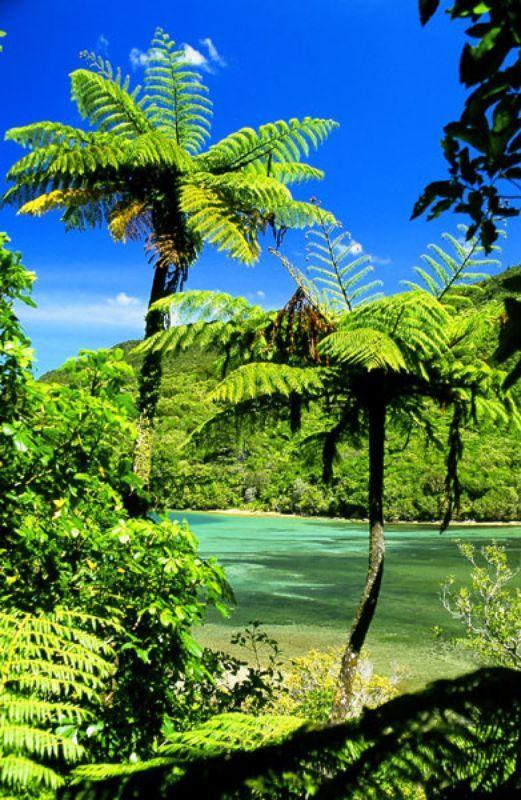 Wilderness Guides – Activities > Walking & Trekking | Marlborough, New Zealand