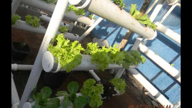 Horta Caseira em tubos de Pvc. e vasos de frlores.