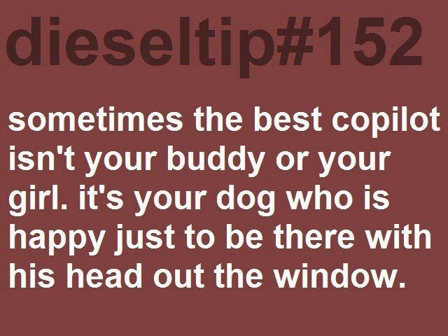 I love my dog. Diesel tip