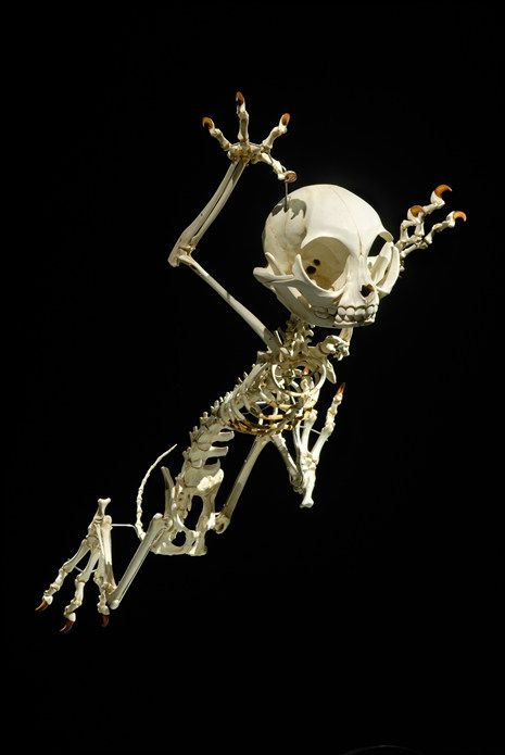 Best Serieranatomi Images On Pinterest Animal Skeletons - Skeletons favourite childhood cartoon characters