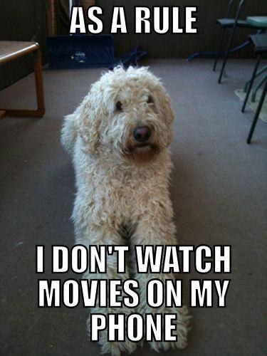 as a rule dog