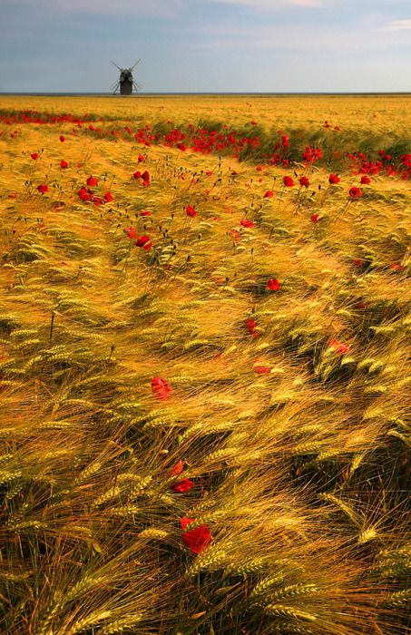Gold and Red, The Netherlands  photo via genehow      A dreamers place...