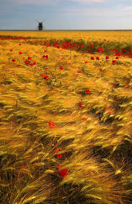 Czerwono-złote spojrzenie na Holandię zachęca do odwiedzin w tym niezwykłym kraju. Odkrywaj świat z Big-Active http://www.big-active.pl/