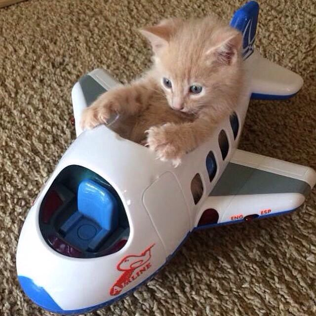 A little kitty in a toy airplane