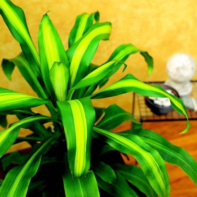 ber ideen zu pflegeleichte zimmerpflanzen auf pinterest topfpflanzen sch ne. Black Bedroom Furniture Sets. Home Design Ideas