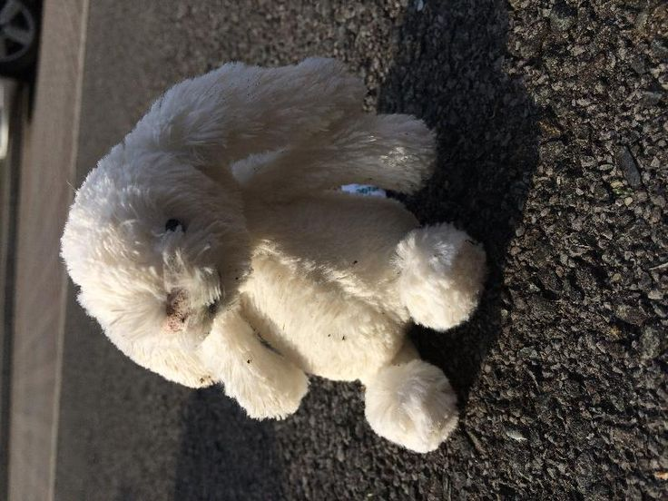 Found on 13 May. 2016 @ Long Ashton, Festival Way, N. Somerset/Bristol. Found - mini white jellycat bunny Visit: https://whiteboomerang.com/lostteddy/msg/4qwgtc (Posted by Jo on 13 May. 2016)