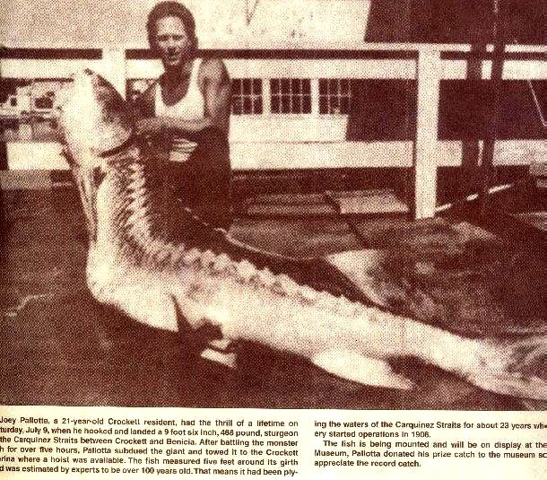 34 best images about Big Fish on Pinterest | Image search ...