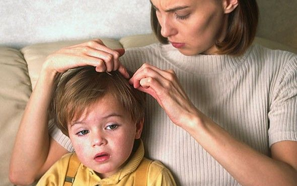 Vacuuming is the safest and best way to remove lice or fallen hairs with attached nits from upholstered furniture, rugs, stuffed animals and car seats.