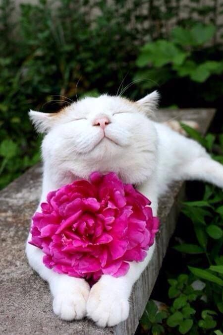 """""""Et quand je vois passer un chat je dis : """"Il en sait long sur l'homme """" Jules Supervielle"""