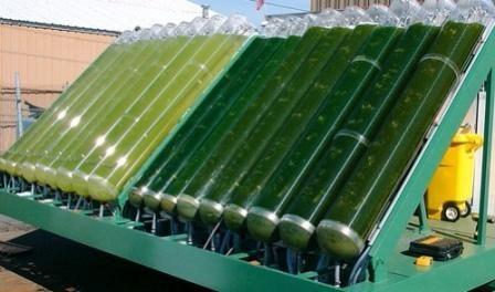 A Alicante, en Espagne, la première unité de production industrielle de biocarburant à partir d'algues a été mise en place pour une première phase de test, d'après le journal Le Monde du 29 janvier dernier. Cent fois plus petites qu'un grain de sable,...