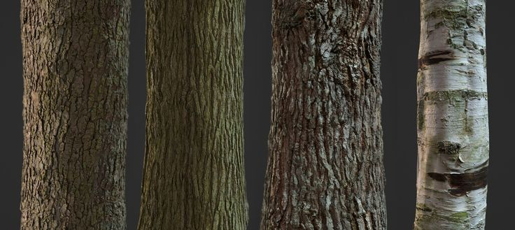 ArtStation - Free Photogrammetry Tile Textures - Bark Pack 01, David Chumilla Liccioli