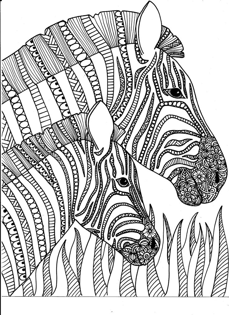 17 best images about Animal Coloring Pages for Adults on