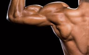 Enquanto a maioria das pessoas associa músculos a força, eles fazem mais do que ajudar a levantar objetos pesados. Os 650 músculos do corpo não só apoiam o movimento, mas também ajudam a manter a postura e a circular o sangue e outras substâncias por todo o corpo, entre outras funções.