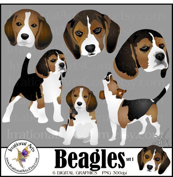 Beagles Dog Graphics Set 1 6 Digital Graphics With 3 Beagles And