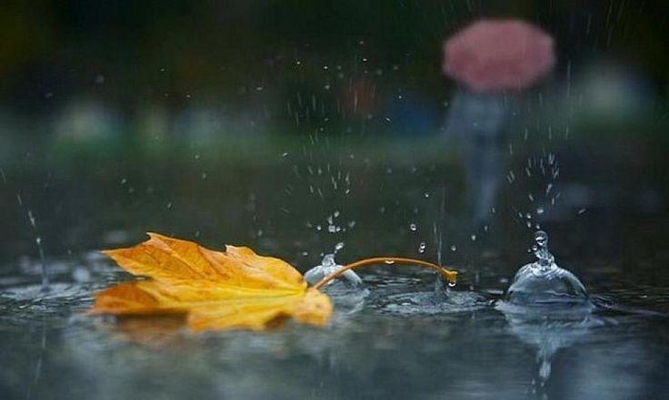 А осінь плаче за вікном Дощем. Чомусь від слів твоїх у серці Щем. Мені ж, не сумно і не жаль, Що осінь. Чому ж так холодно від слів І досі?.. Я лист багряний підніму На спогад. Про ці слова твої сумні  І погляд. Нехай ночами осінь п,є Печалі І щезне біль в твоїх словах Надалі... А осінь плаче за вікном Дощами Тебе люблю.. І осінь теж. Без тями.
