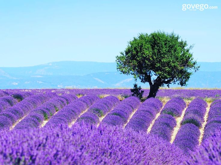 Hani bazen her şeyden uzaklaşıp sırtına da çantayı alıp bambaşka yerlere gitmek istersin ya... Fransa'nın güneydoğusundaki bir bölge olan Provence, eşsiz lavanta tarlaları ile işte öyle bir yer.  Herkese mutlu pazartesiler! :) ----------------------- govego.com  www.govego.com/ucak-bileti