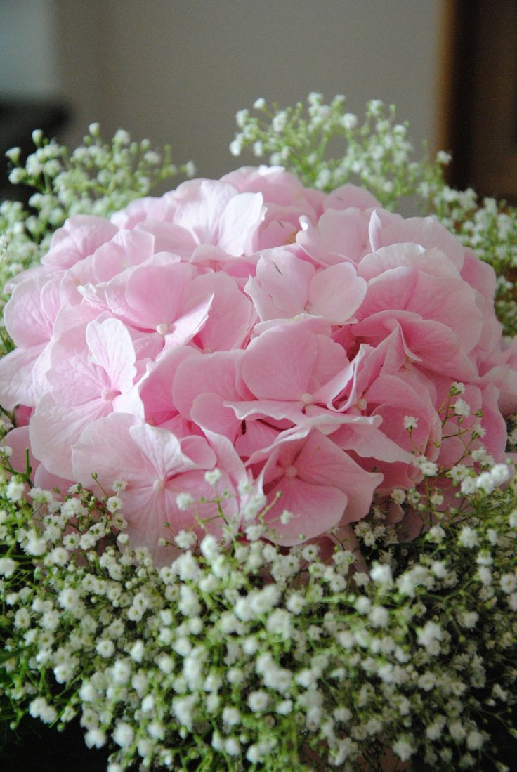 Pink Hydrangea And Baby S Breath Bouquet Inspiration