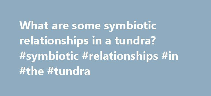 What are some symbiotic relationships in a tundra? #symbiotic #relationships #in #the #tundra http://fresno.nef2.com/what-are-some-symbiotic-relationships-in-a-tundra-symbiotic-relationships-in-the-tundra/  # What are some symbiotic relationships in a tundra? Related Questions What are examples of symbiotic relationships in the desert? A: There are three types of symbiotic relationships that occur in the desert: mutualism, commensalism and parasitism. Examples are, respectively, yucca…