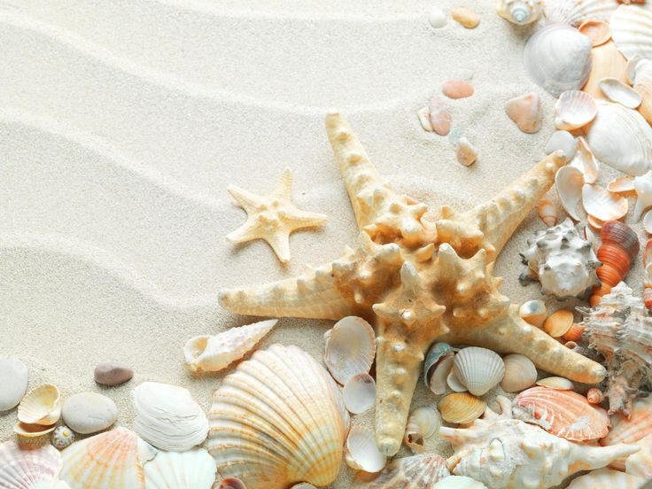 Beautiful sea shell tower made from Pottery Barn shells. Description from pinterest.com. I searched for this on bing.com/images