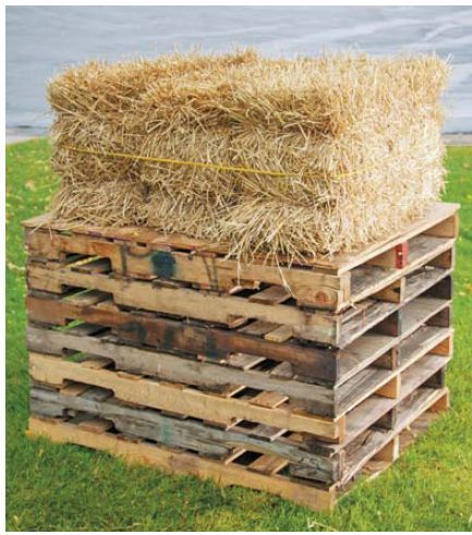 25 Unique Straw Bale Gardening Ideas On Pinterest Hay