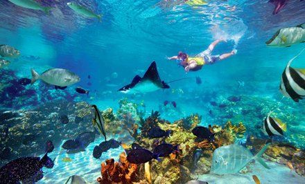 imagen para Tour por arrecife