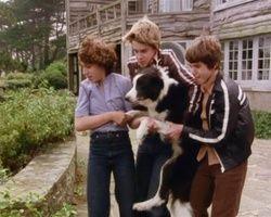 screenshot: George, Julian und Dick tragen Timmy in Sichherheit