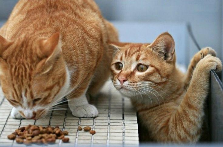 Сухой корм для животных в домашних условиях: экономно, вкусно и здорово