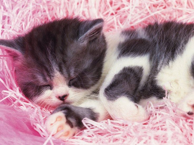Cute Baby Kitten | Critters | Pinterest