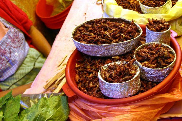 Chapulines.. Comida tradicional de Oaxaca