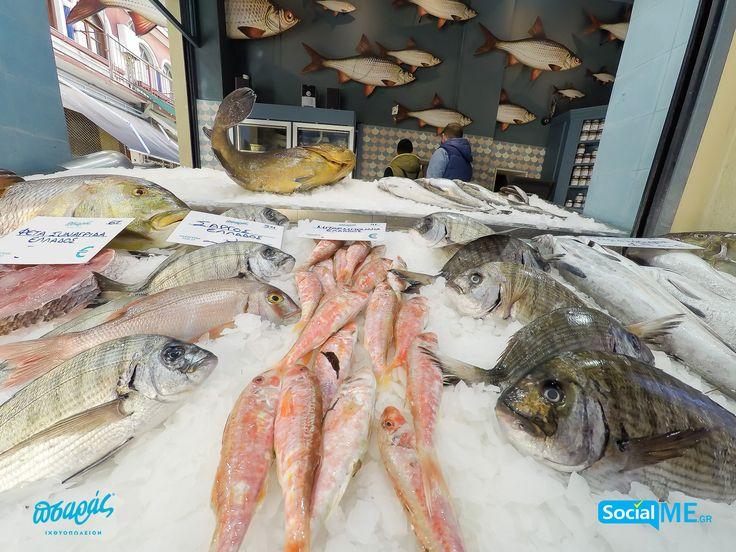Όμορφα Ψάρια που φέρνουν στα σπίτια σας ωραίες θαλασσινές γεύσεις!!